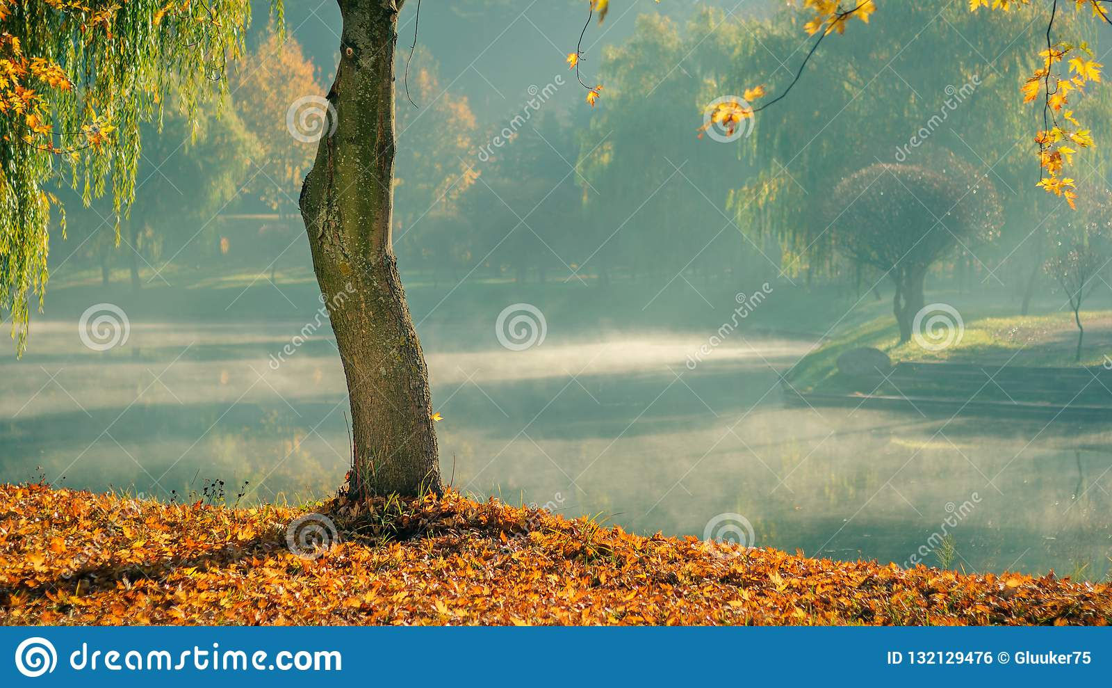 Золотистая осень уединенное обнаженное дерево с упаденными листьями на побережье на фоне светлого тумана утра над водой в