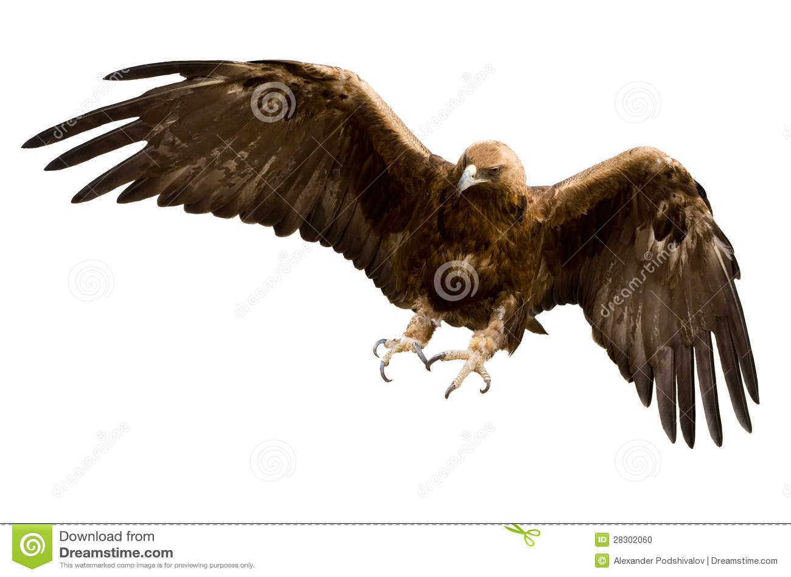 Золотистый изолированный орел,