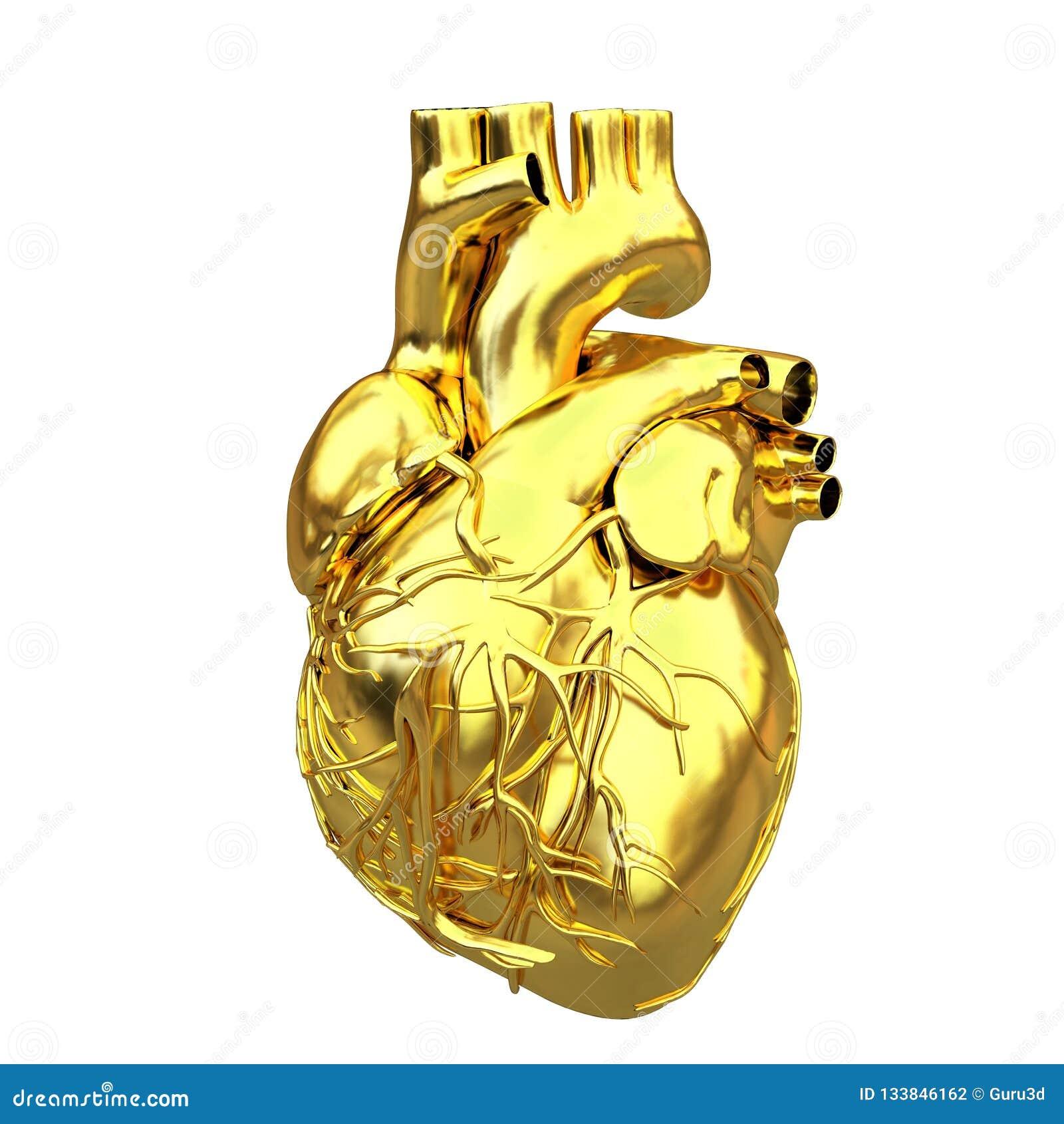 Золотое анатомическое сердце