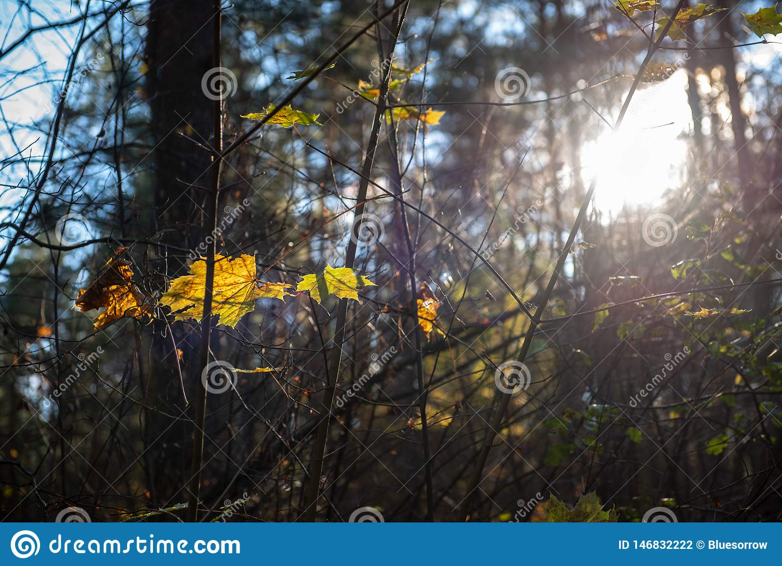 золото осени покрасило листья с предпосылкой нерезкости и ветвями дерева