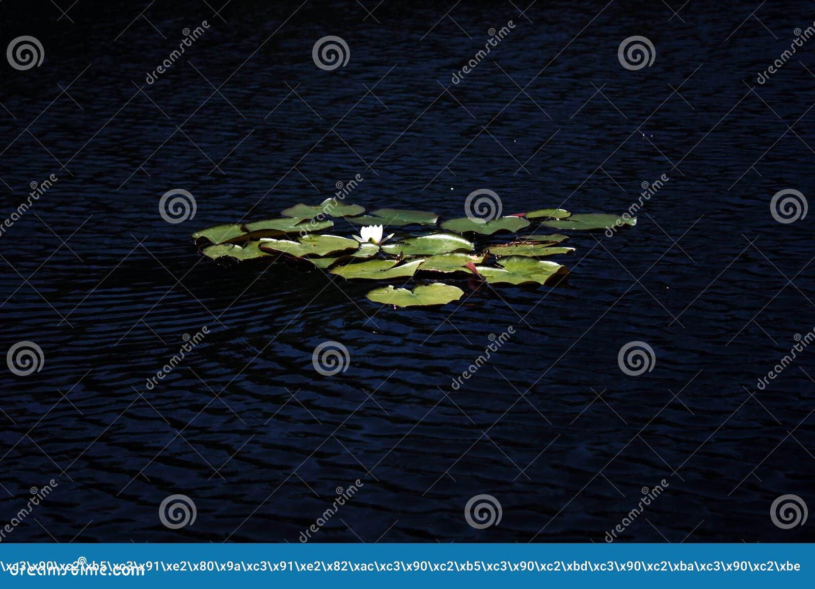 Зона Linevo Омска озера Российской Федерации