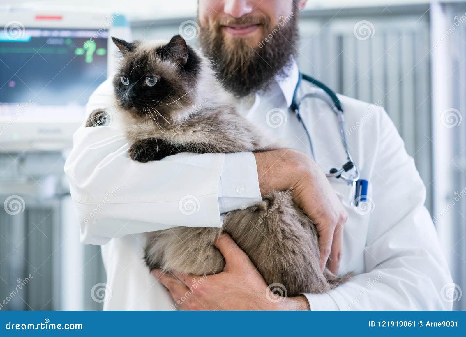 Зооветеринарный доктор любимчика держа кота в его животной клинике