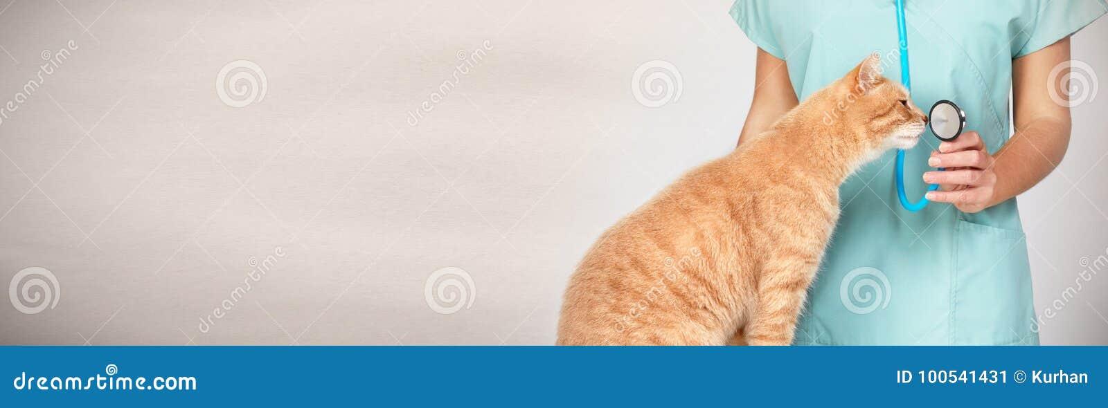 Зооветеринарный доктор с котом в ветеринарной клинике