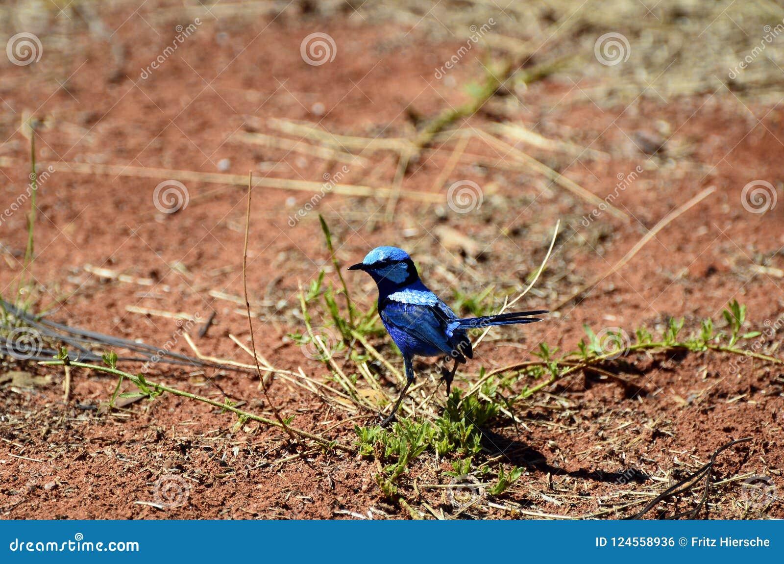 Зоология, австралийские птицы