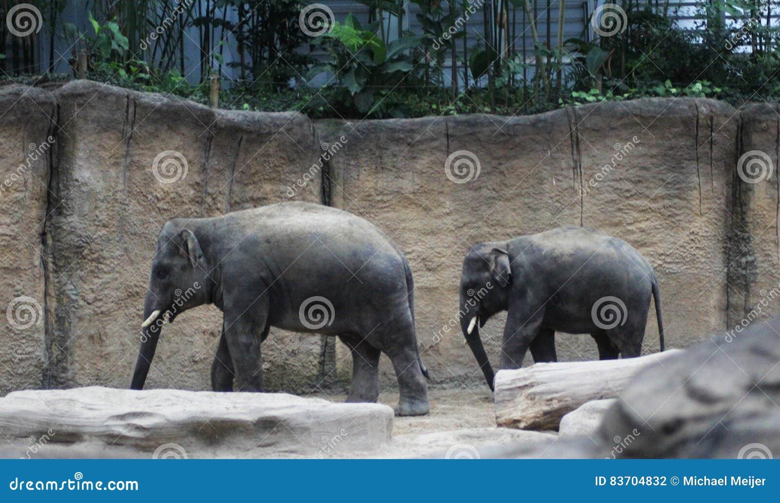 Зоопарк 2 азиатский elepants