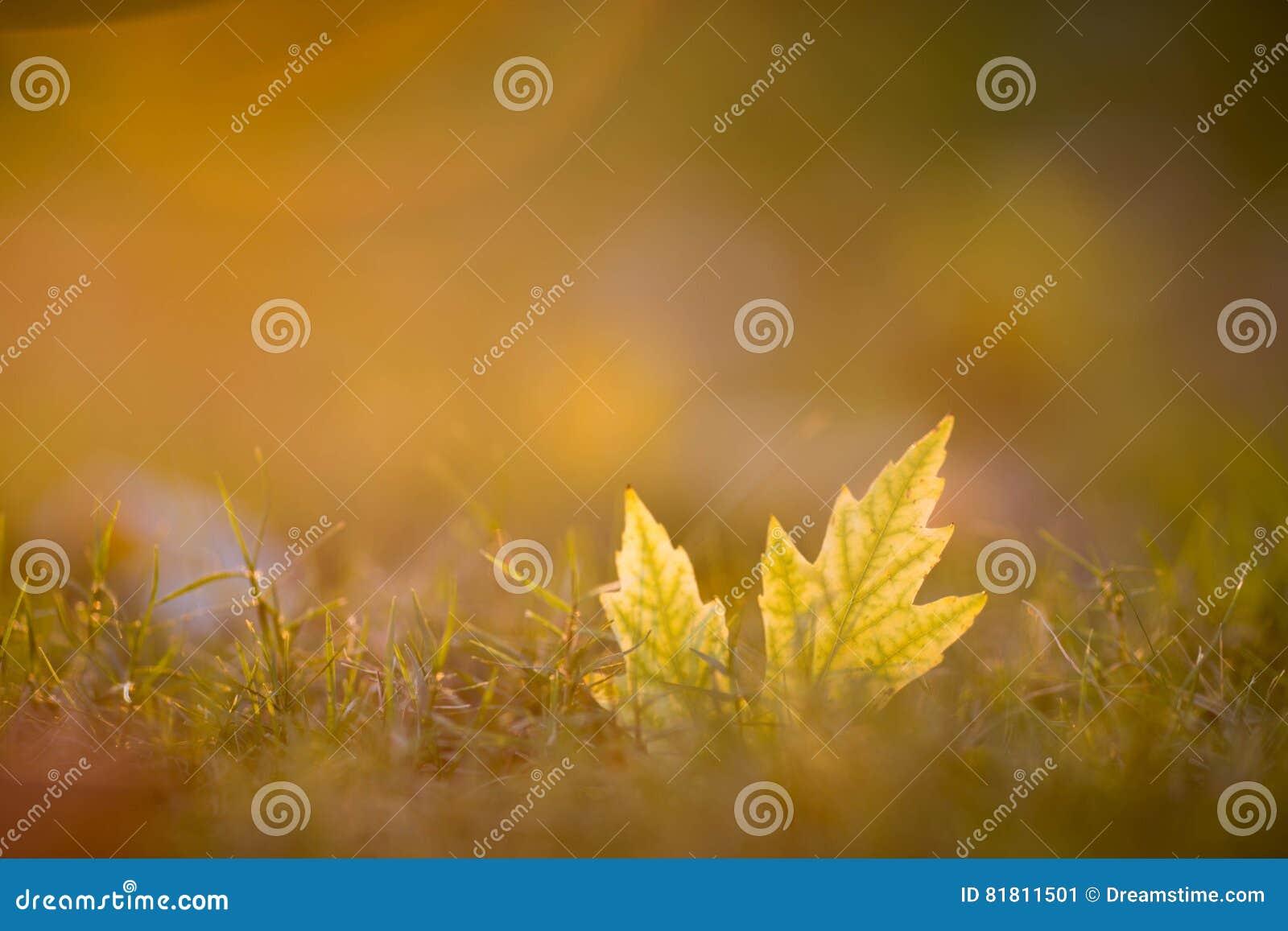 Золотое падение травы лист часа