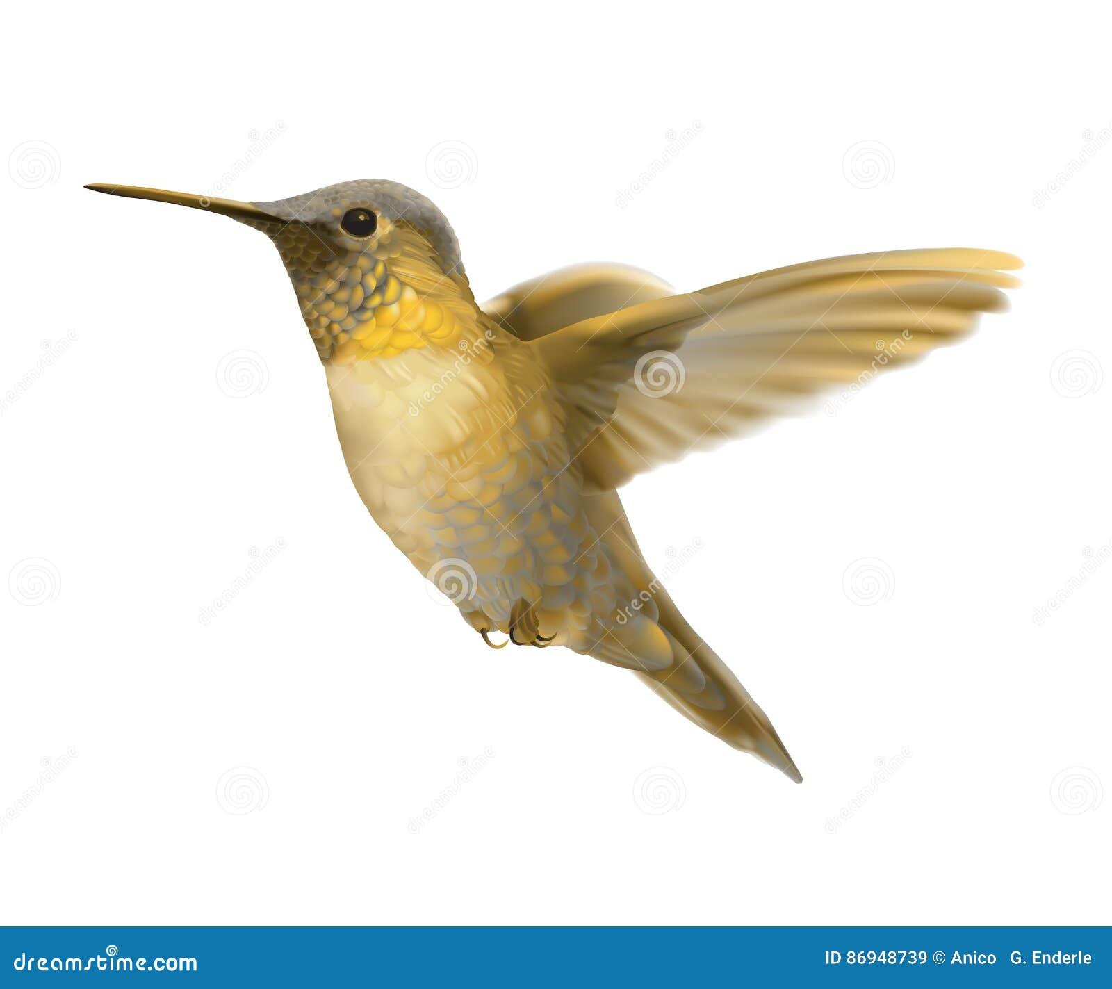 Золотой колибри летая