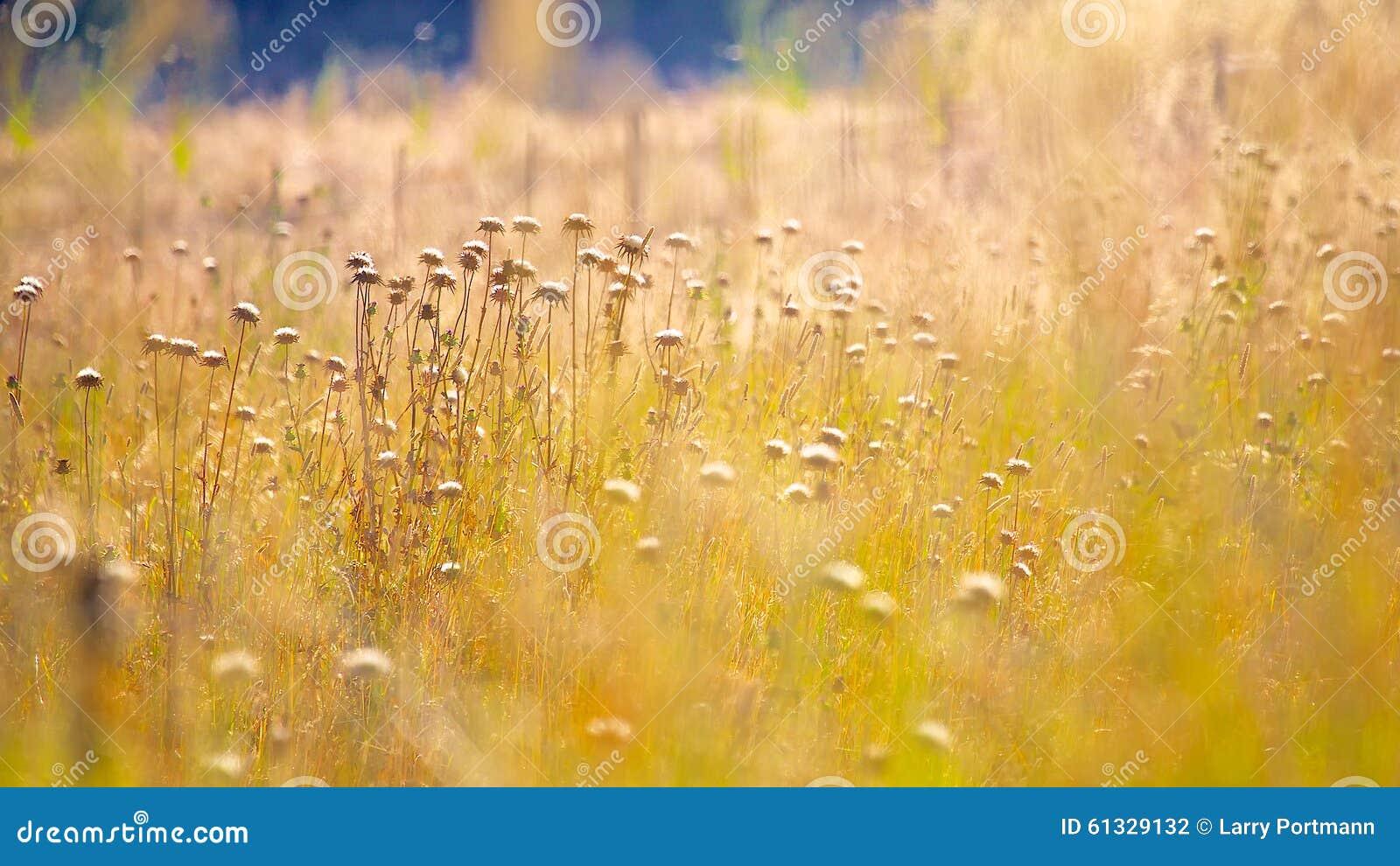 Золотой свет над терновой травой