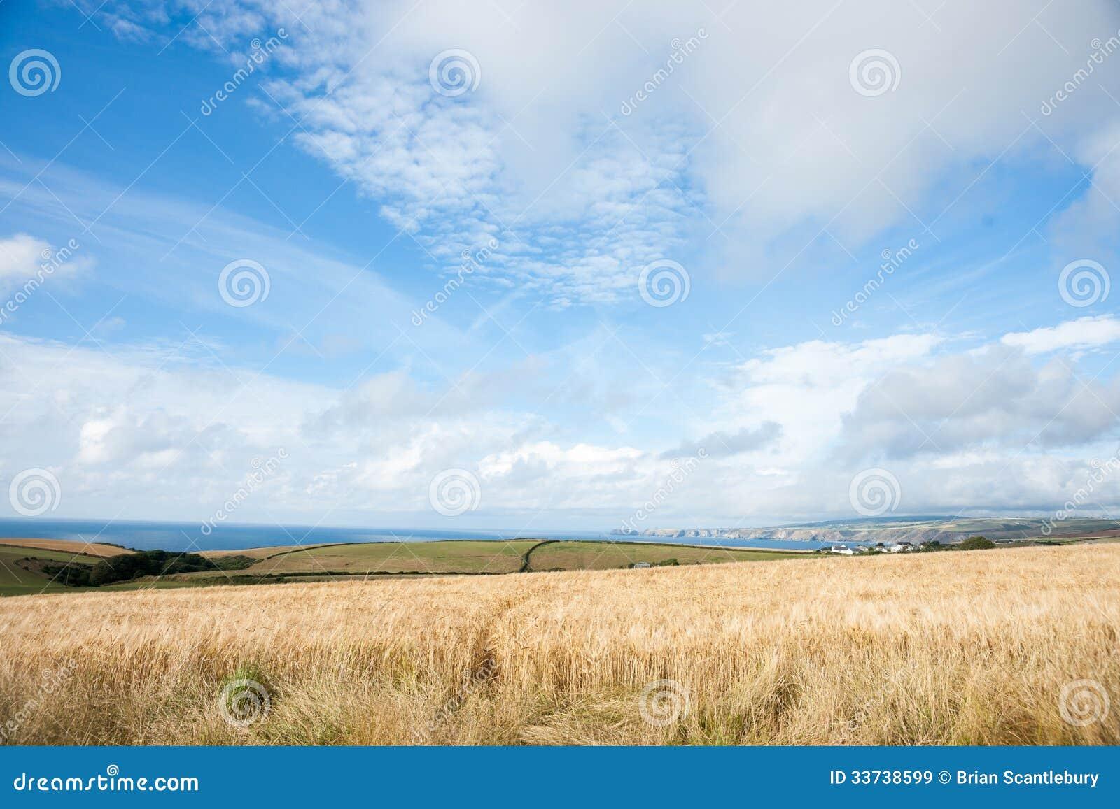 Золотые поля с побережьем вперед