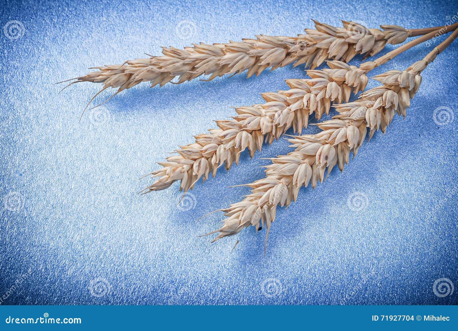 Золотые уши пшеницы на голубом конце предпосылки вверх по взгляду