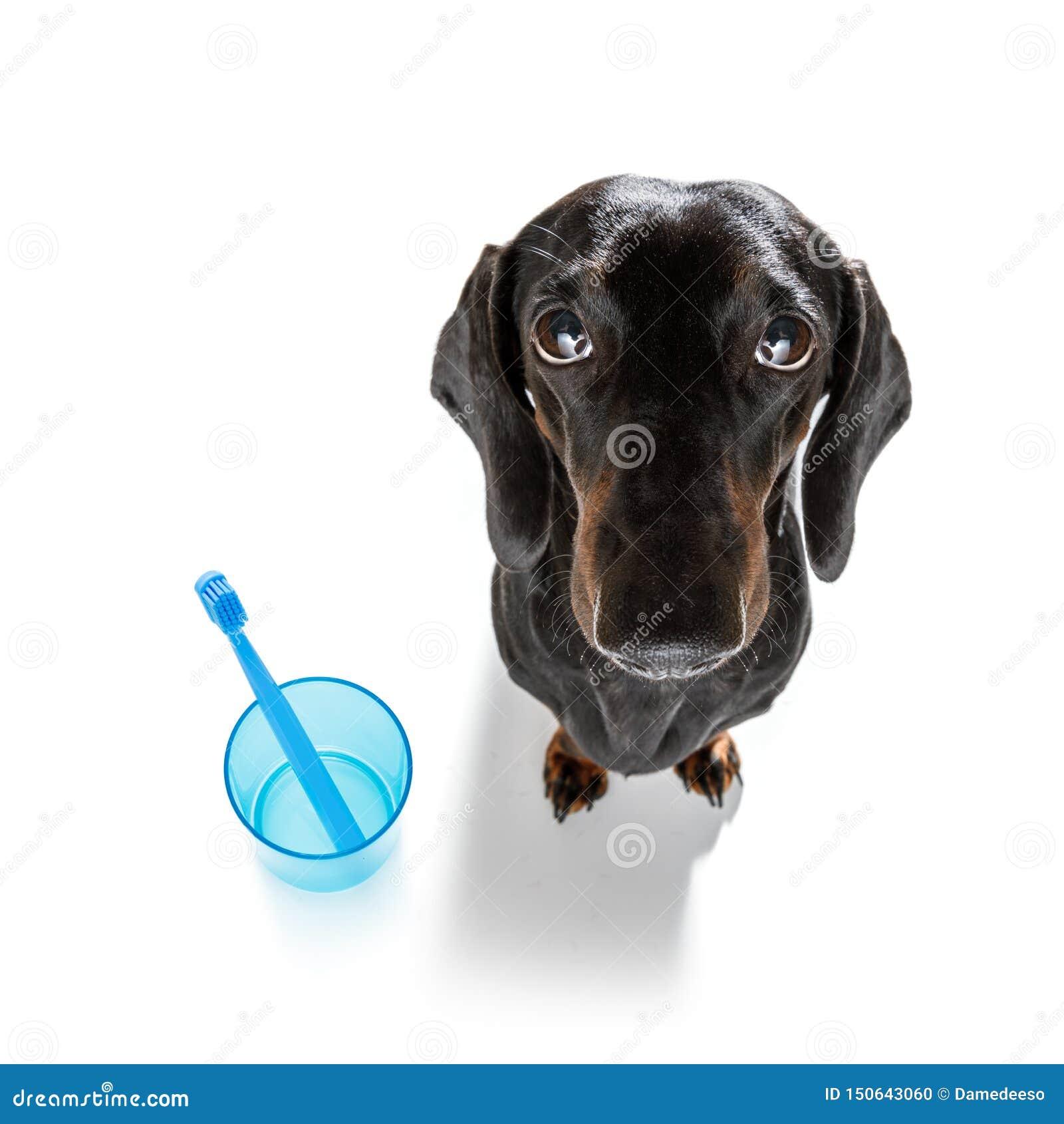 Зубоврачебная собака зубной щетки