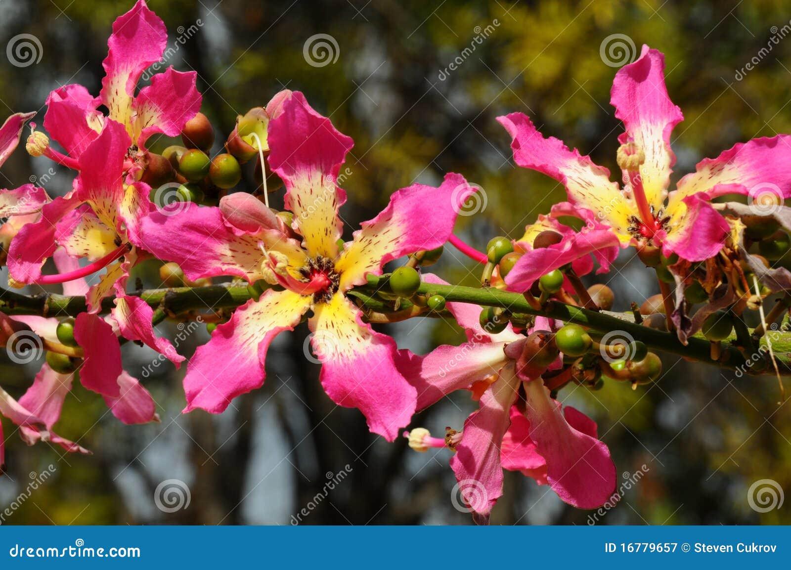 зубочистка цветет silk вал