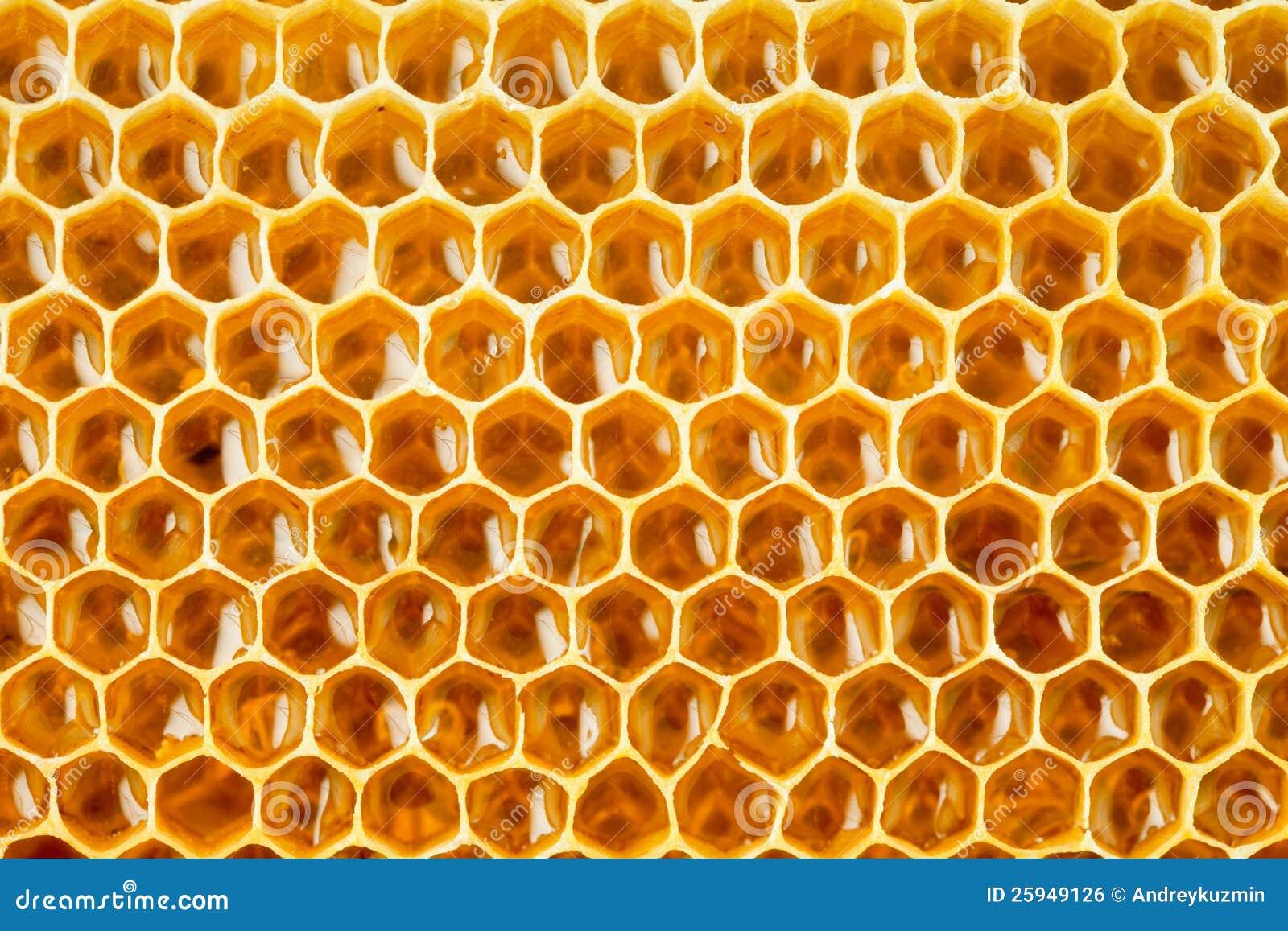 Пчелиные соты с мёдом; фотограф Андрей Кузьмин; дата съёмки 31 июля 2012 г.; фото 4187426.