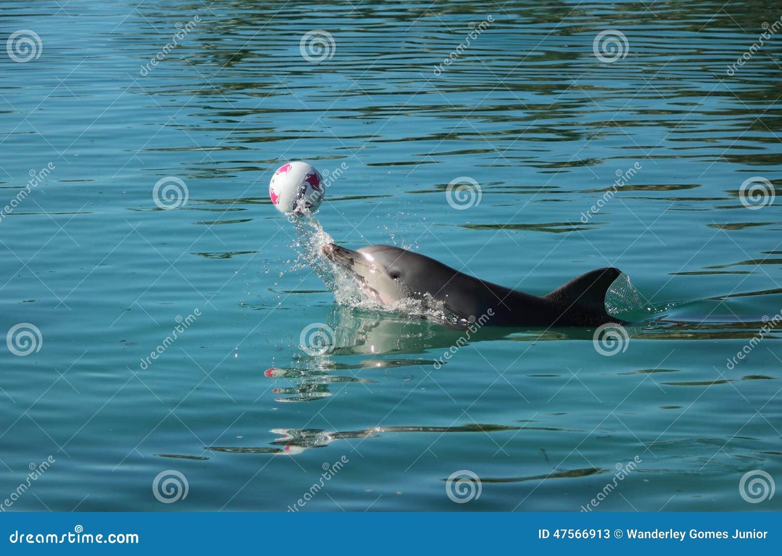 Играть дельфина