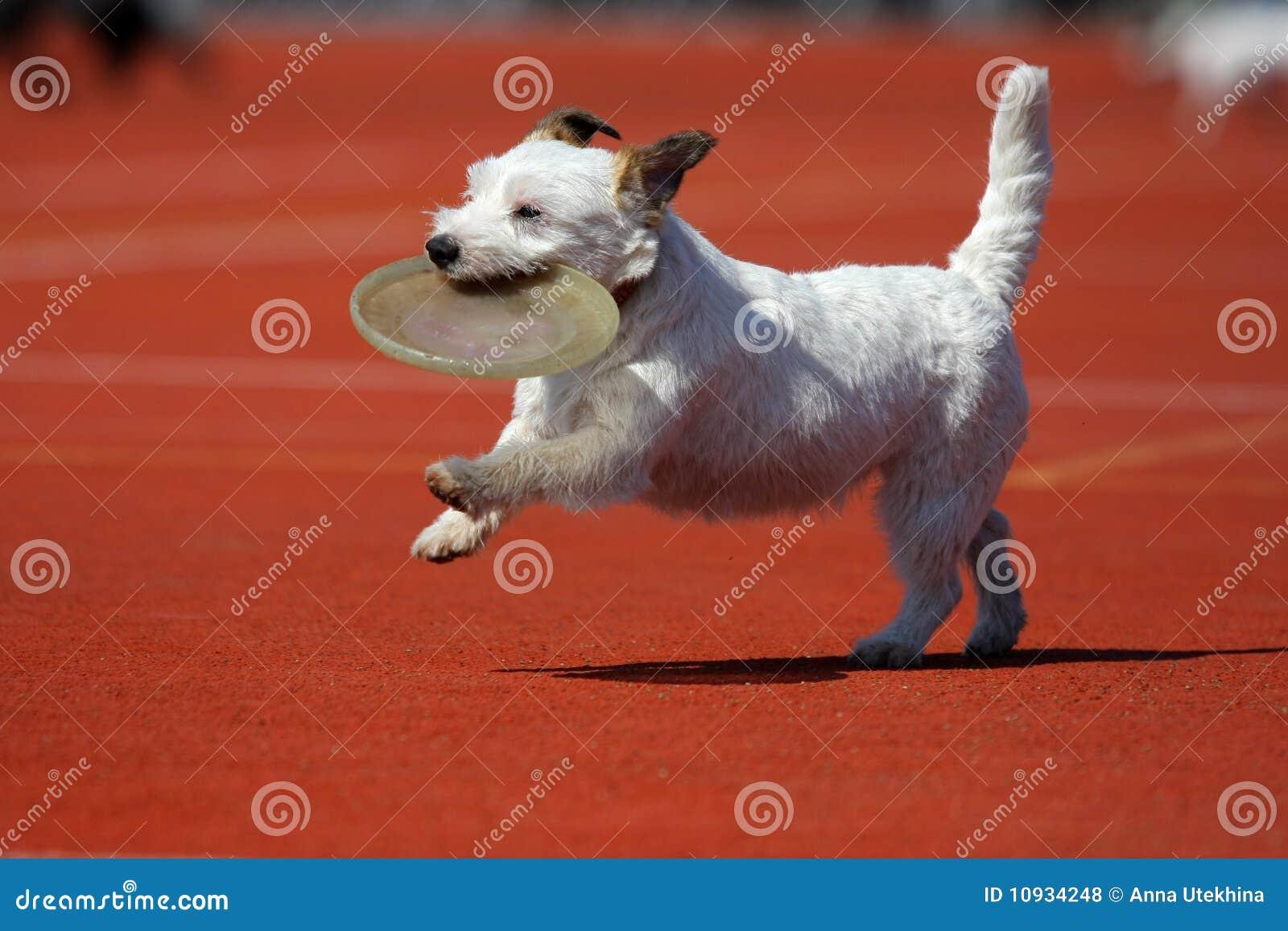 играть летания собаки диска