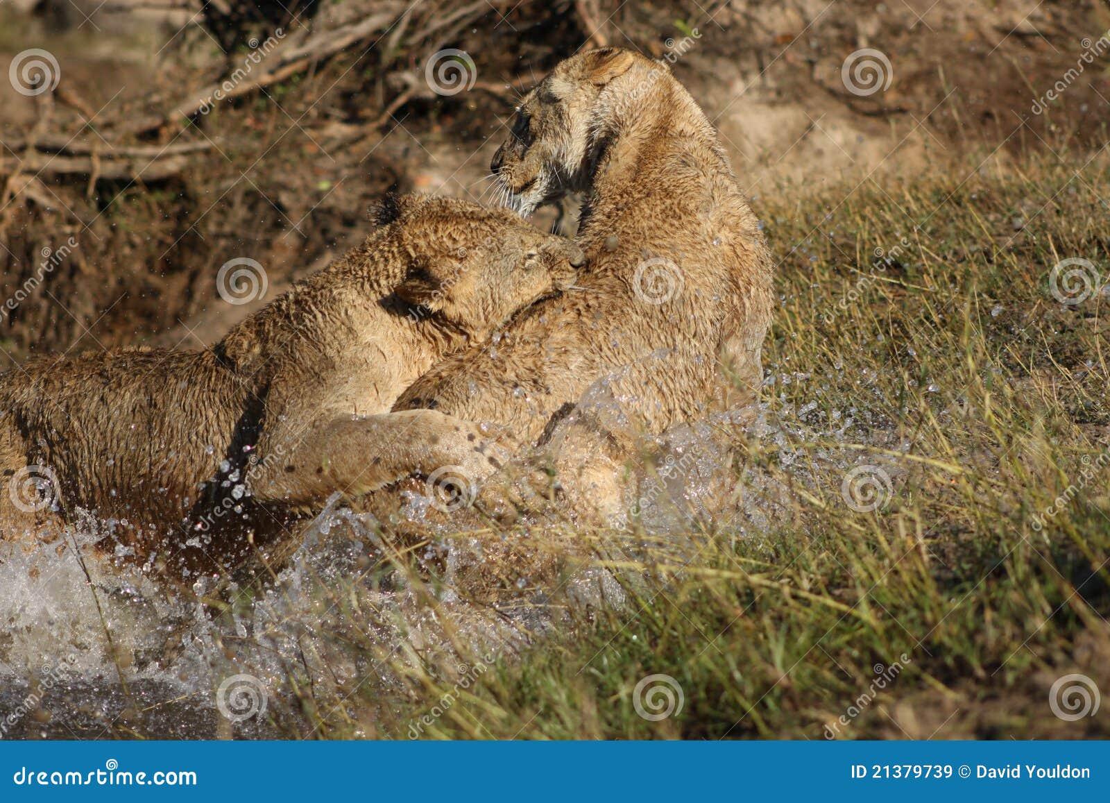 играть львов