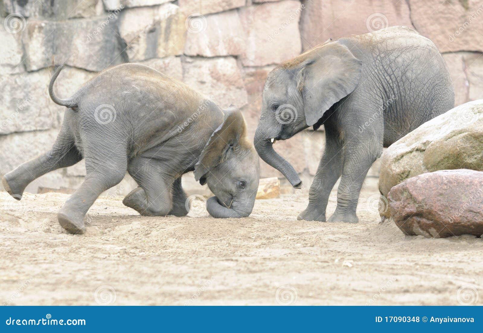 играть слонов младенца