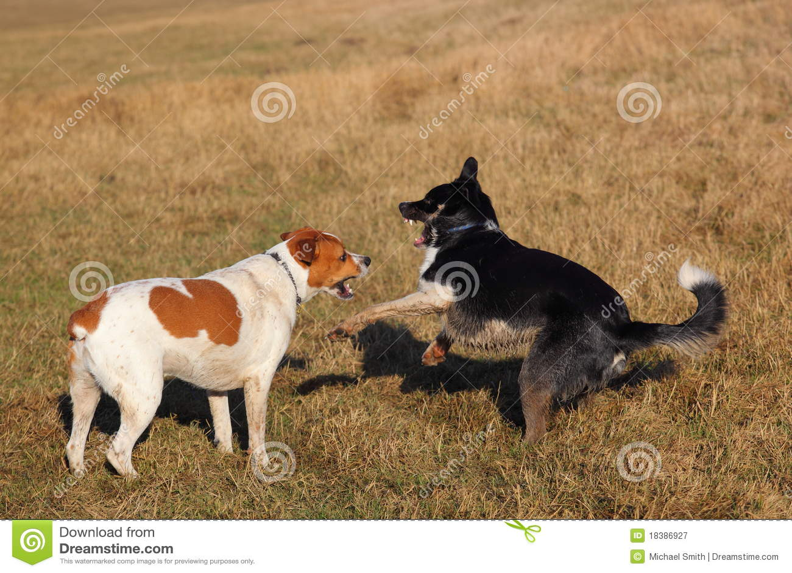 играть собак