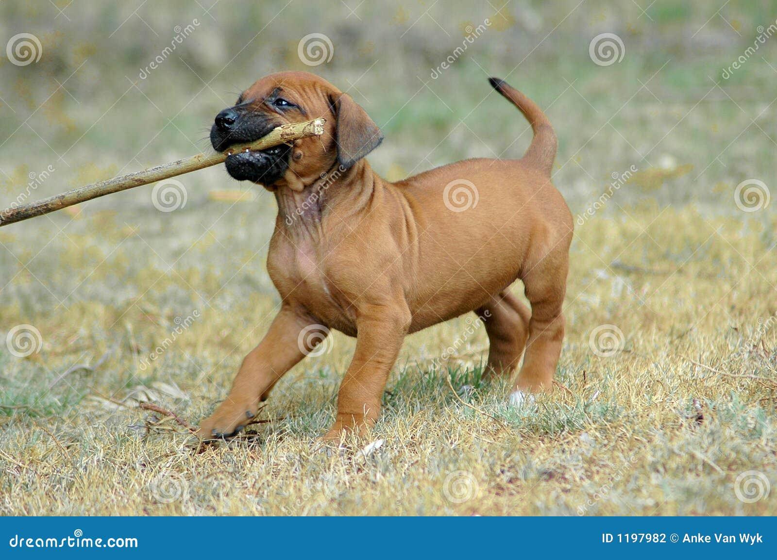 играть щенка