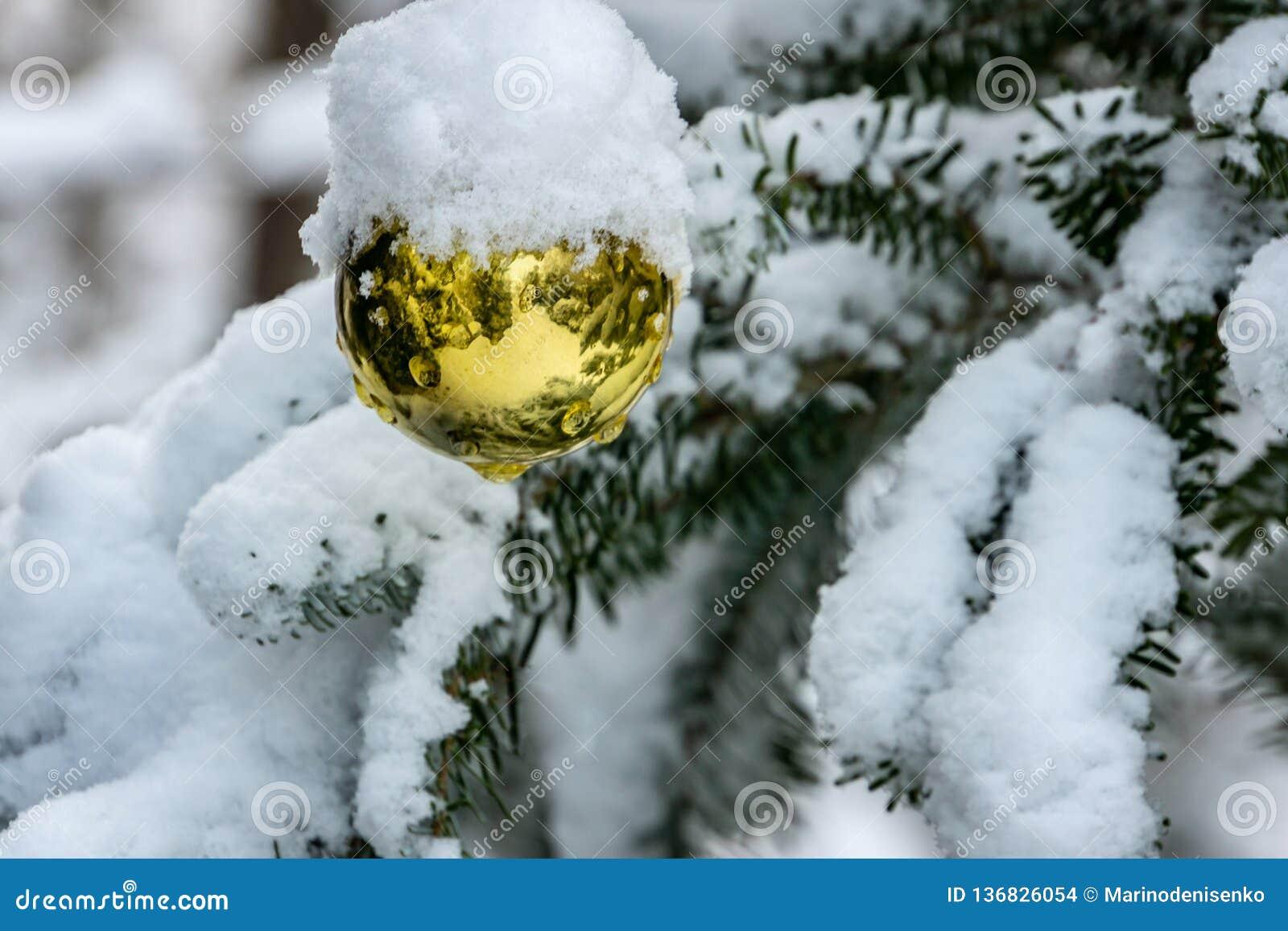 Игрушка рождества, шарик золота рождества под снегом на ветви ели Реальная зима в саде