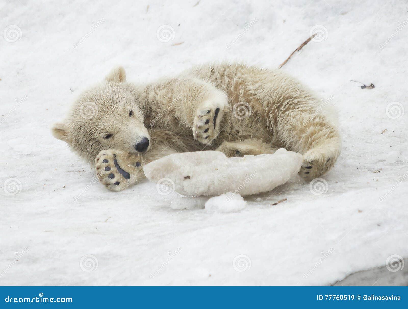 Большой хуй медведя