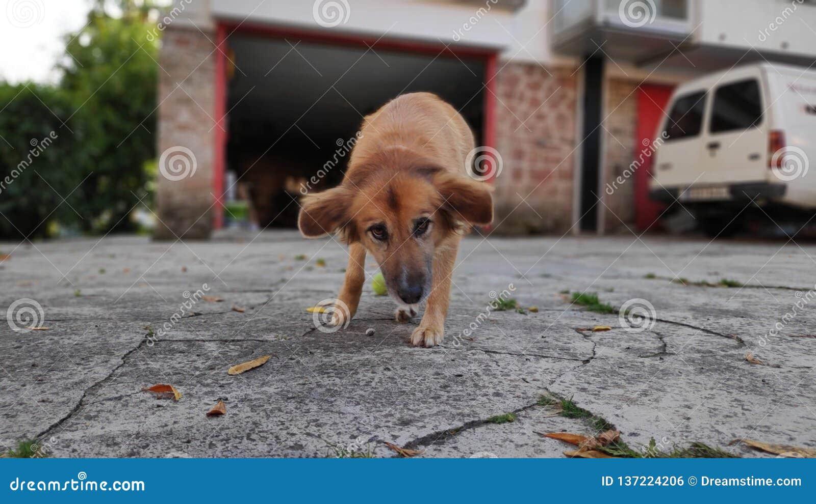 Игры собаки в саде