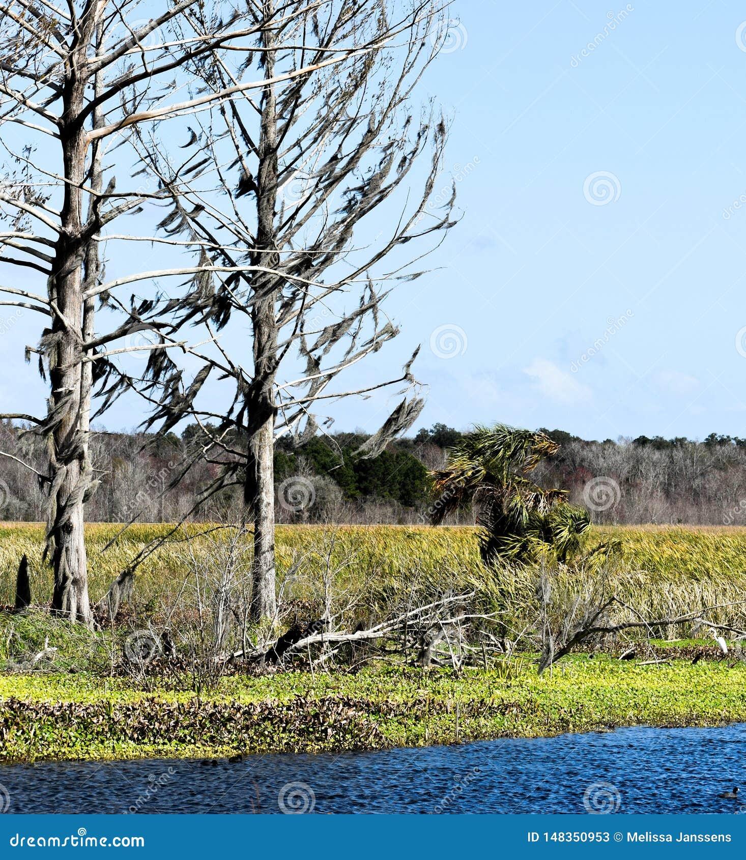 Идилличный и спокойный устанавливать книги рассказа старых деревьев обозревая озеро и природный заповедник во Флориде