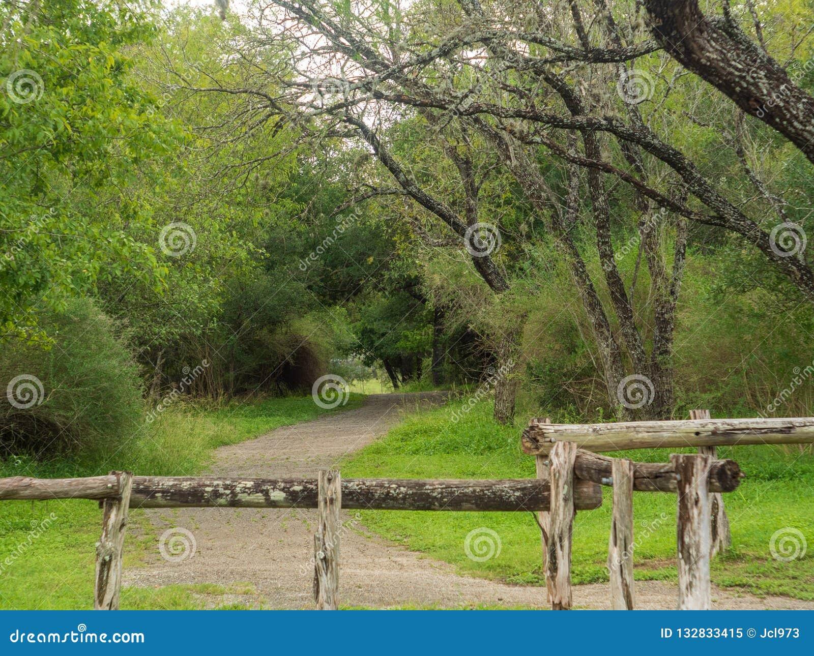 Идя следы в тихом, спокойном, мирном Forest Park с живыми зелеными деревьями и растительностью