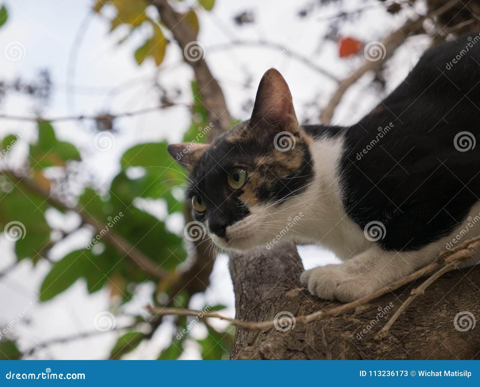 Избежание кота Pussy другой кот вверх по дереву