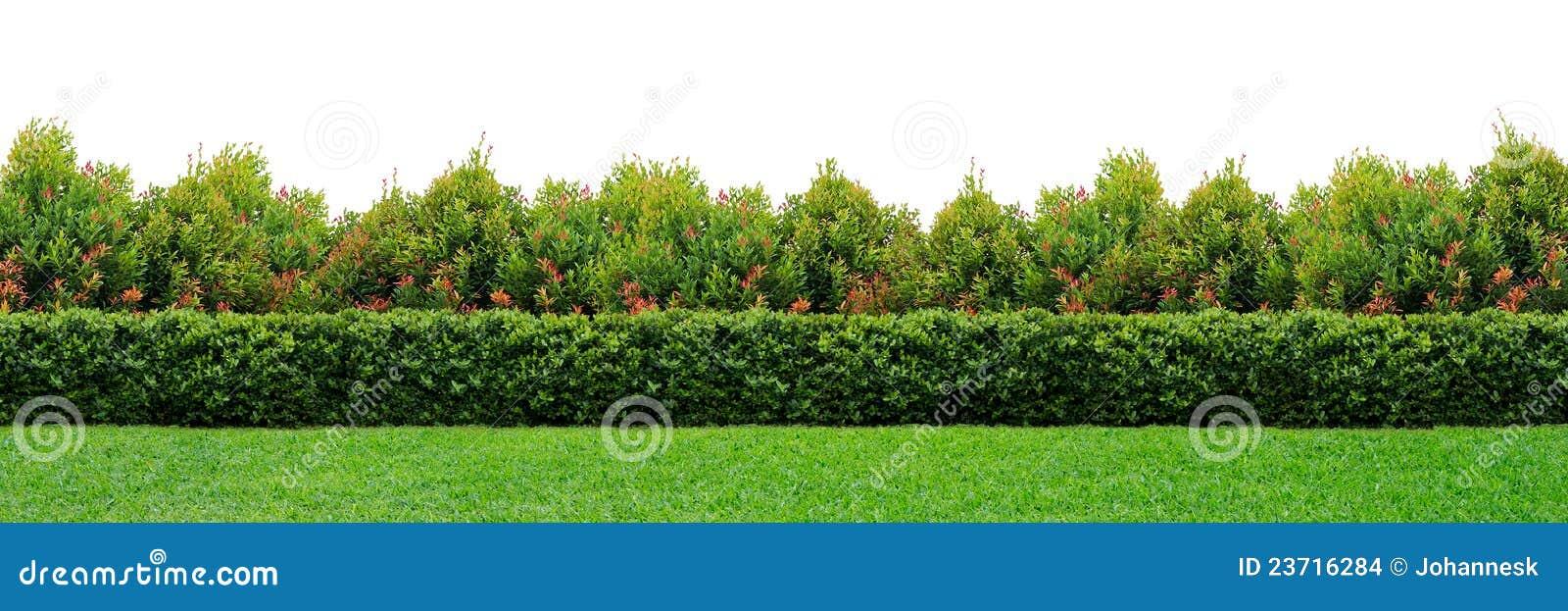изгородь сада