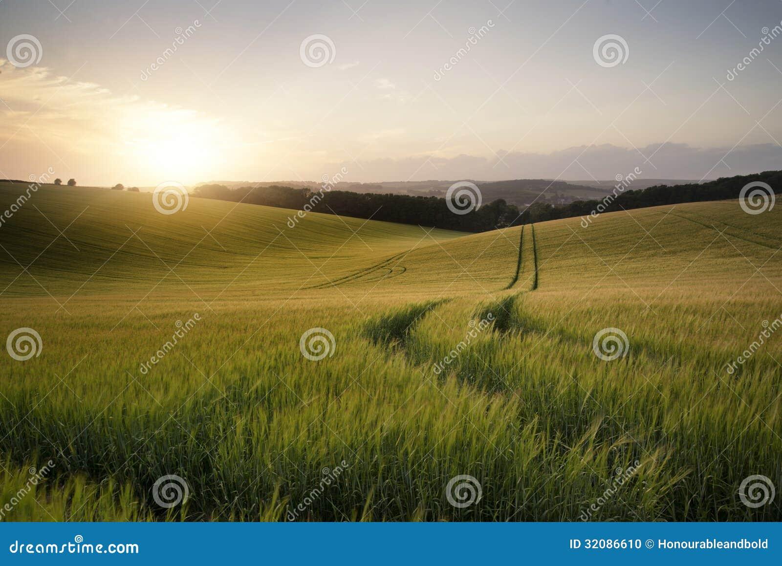 Изображение ландшафта лета пшеничного поля на заходе солнца с красивым l