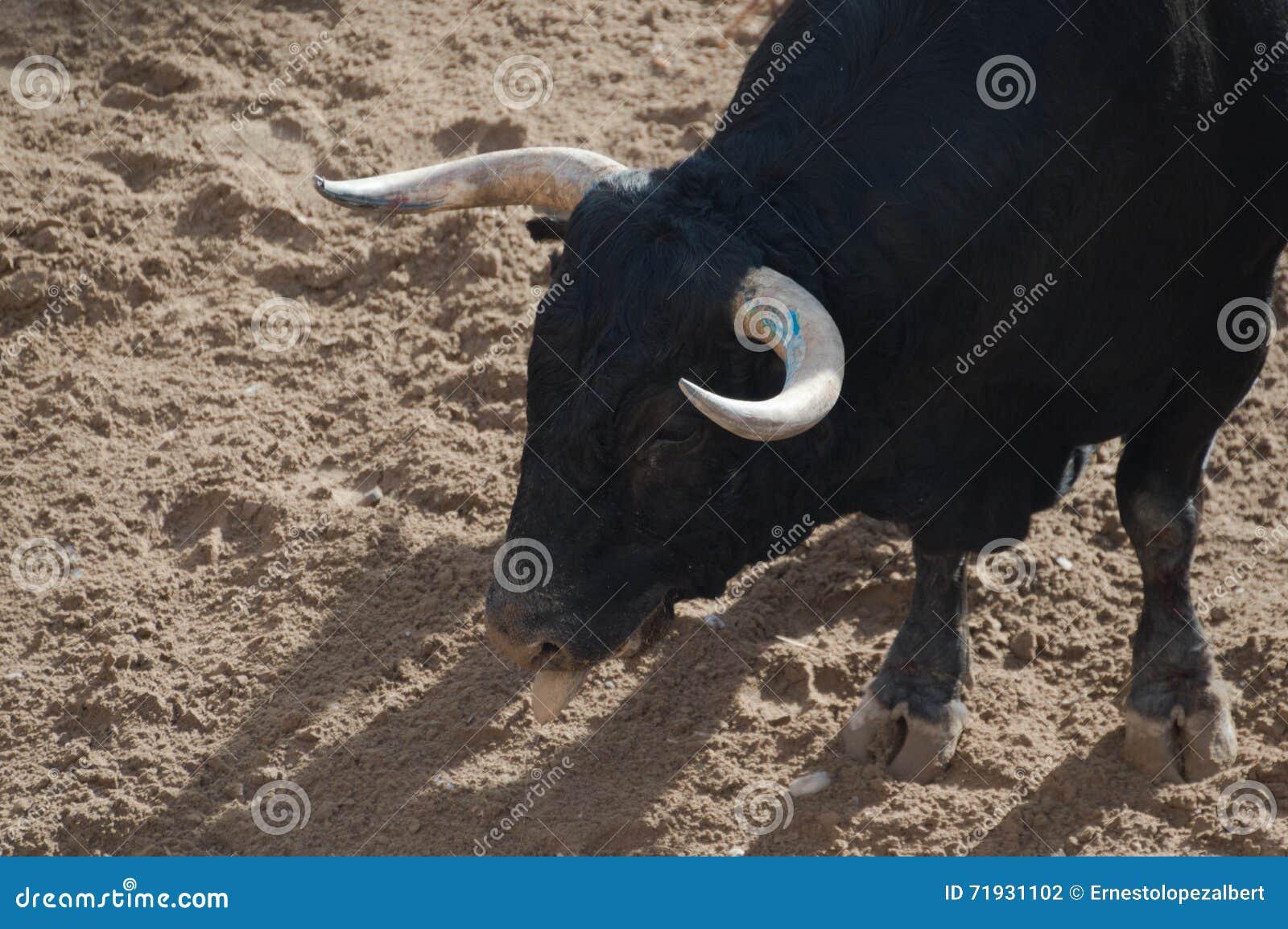 Изображение быка на улице