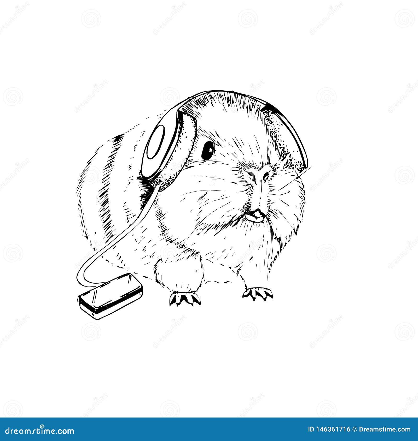 Изображение вектора смешной морской свинки с наушниками которая слушает музыку