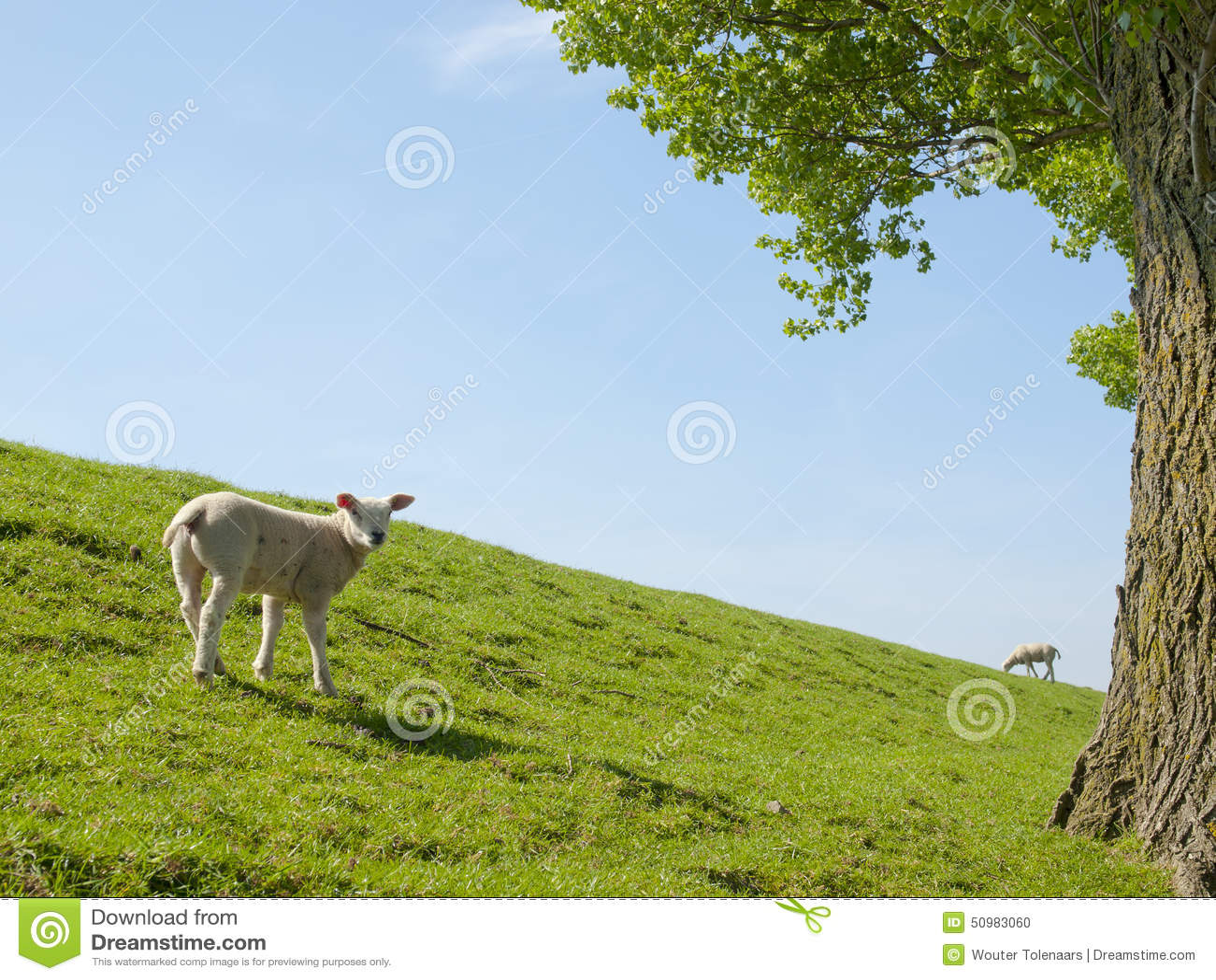 Изображение весны молодой овечки