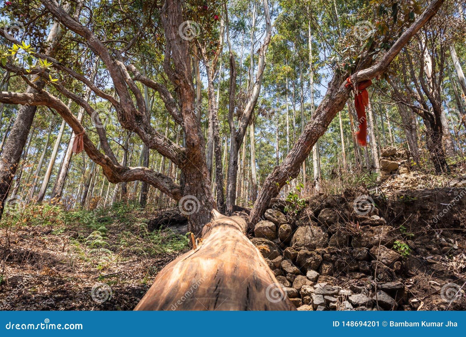 Изображение вырезывания дерева с зеленой предпосылкой леса
