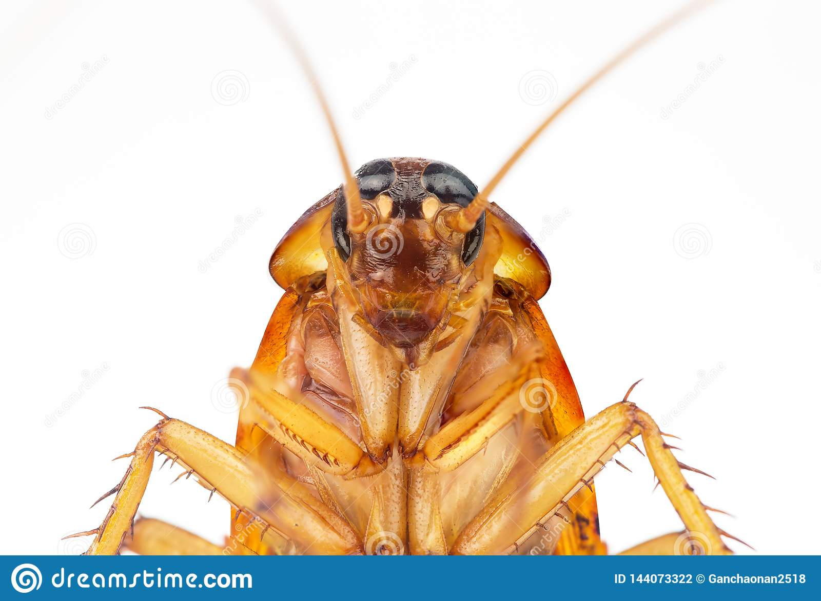 Изображение действия тараканов