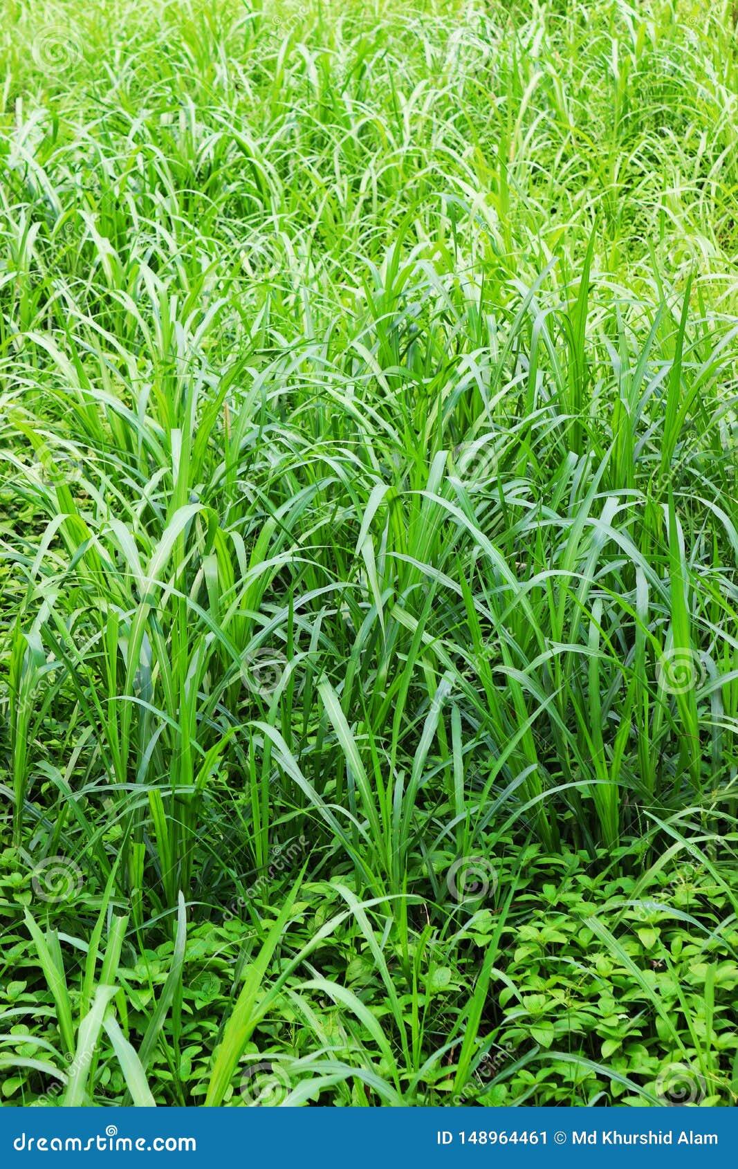 Изображение зеленых лист естественное Лес и зеленое дерево джунглей Красивый естественный пейзаж Глубокие тропические джунгли r Б