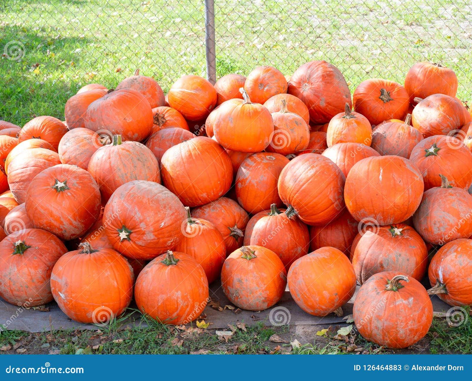 Изображение кучи пакостных оранжевых тыкв