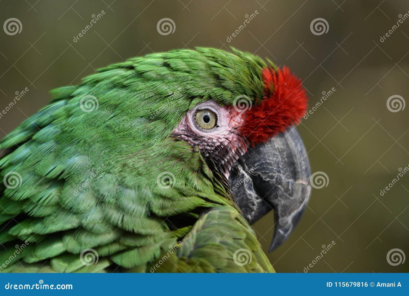 Изображение макроса зеленых стороны и глаза ` s попугая