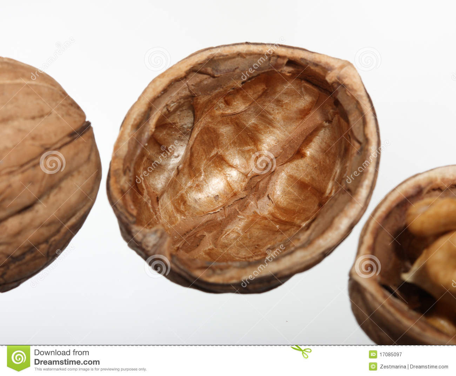 изолированная белизна грецкого ореха ореховыйой скорлупы s