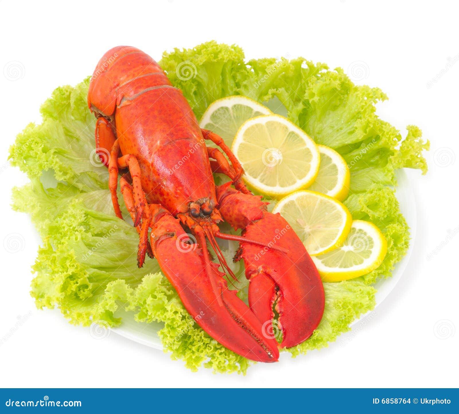 изолированная белизна омара