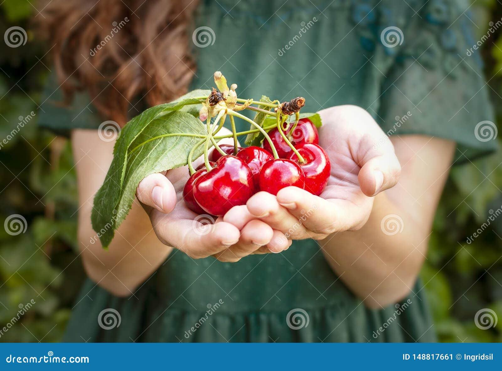 Изолированная молодая женщина держа некоторые вишни в ее руках Большие красные вишни с листьями и черенок Один человек на предпос