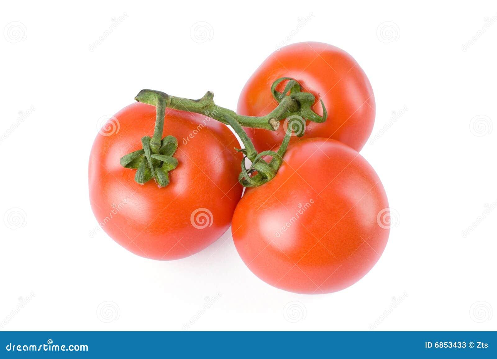 изолированные томаты белые