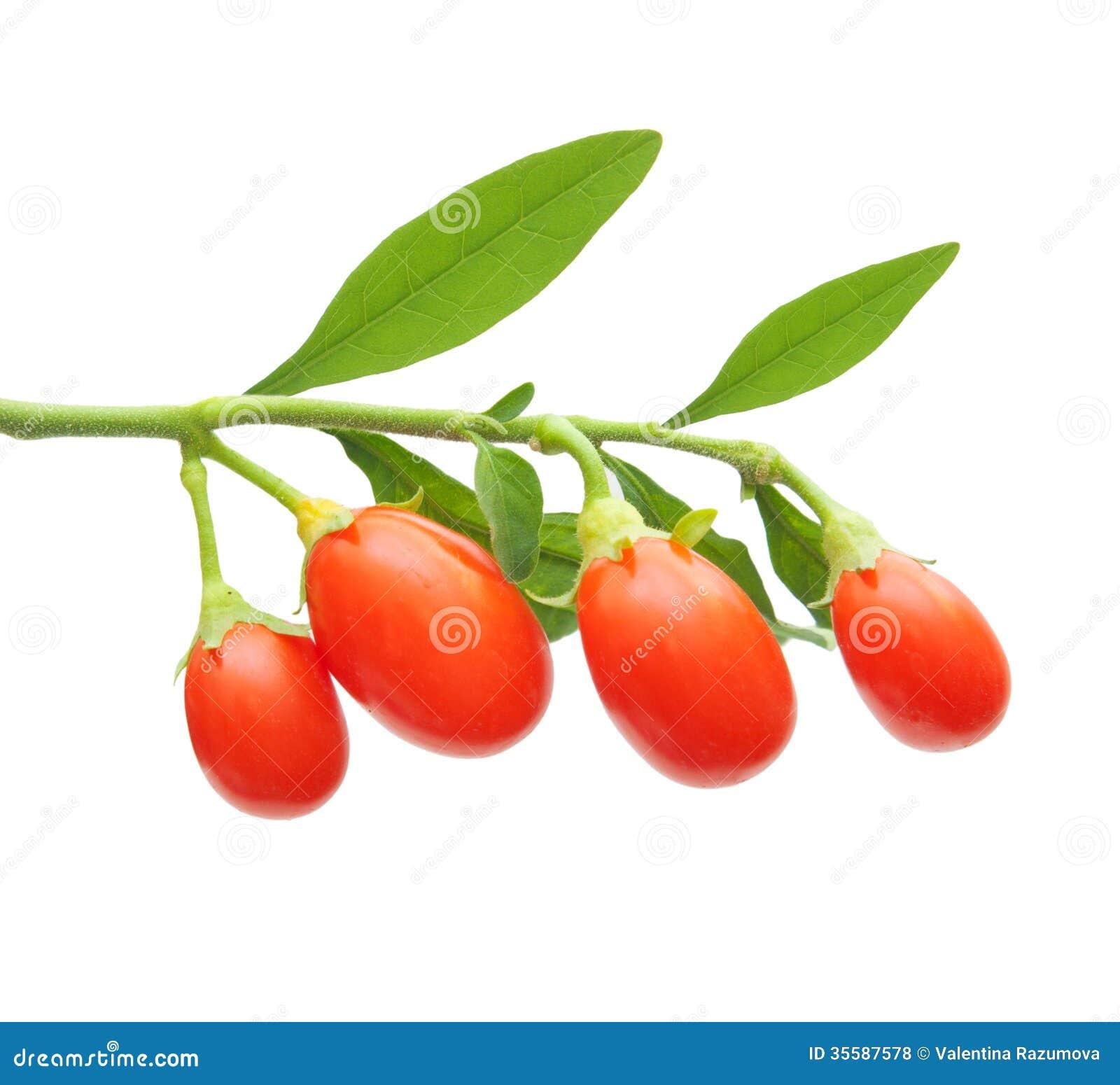 Изолированная ягода Goji