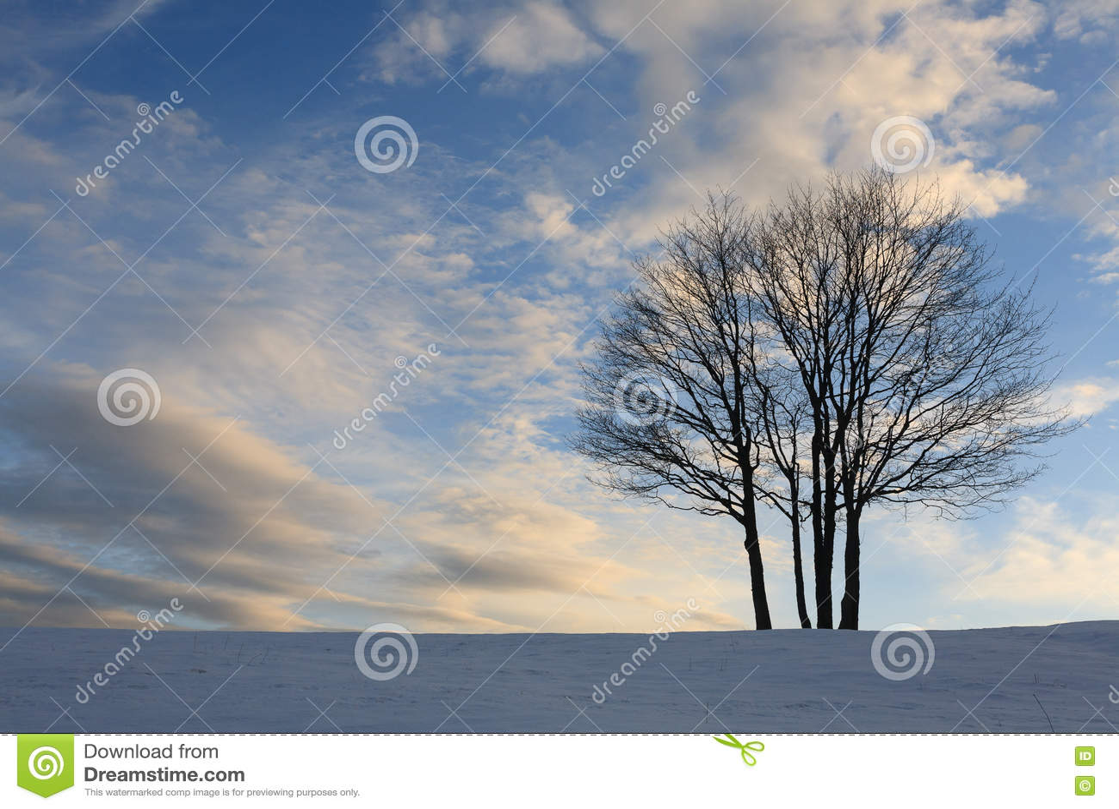 Изолированное дерево над голубым небом amden зона около зимы Швейцарии катания на лыжах панорамы
