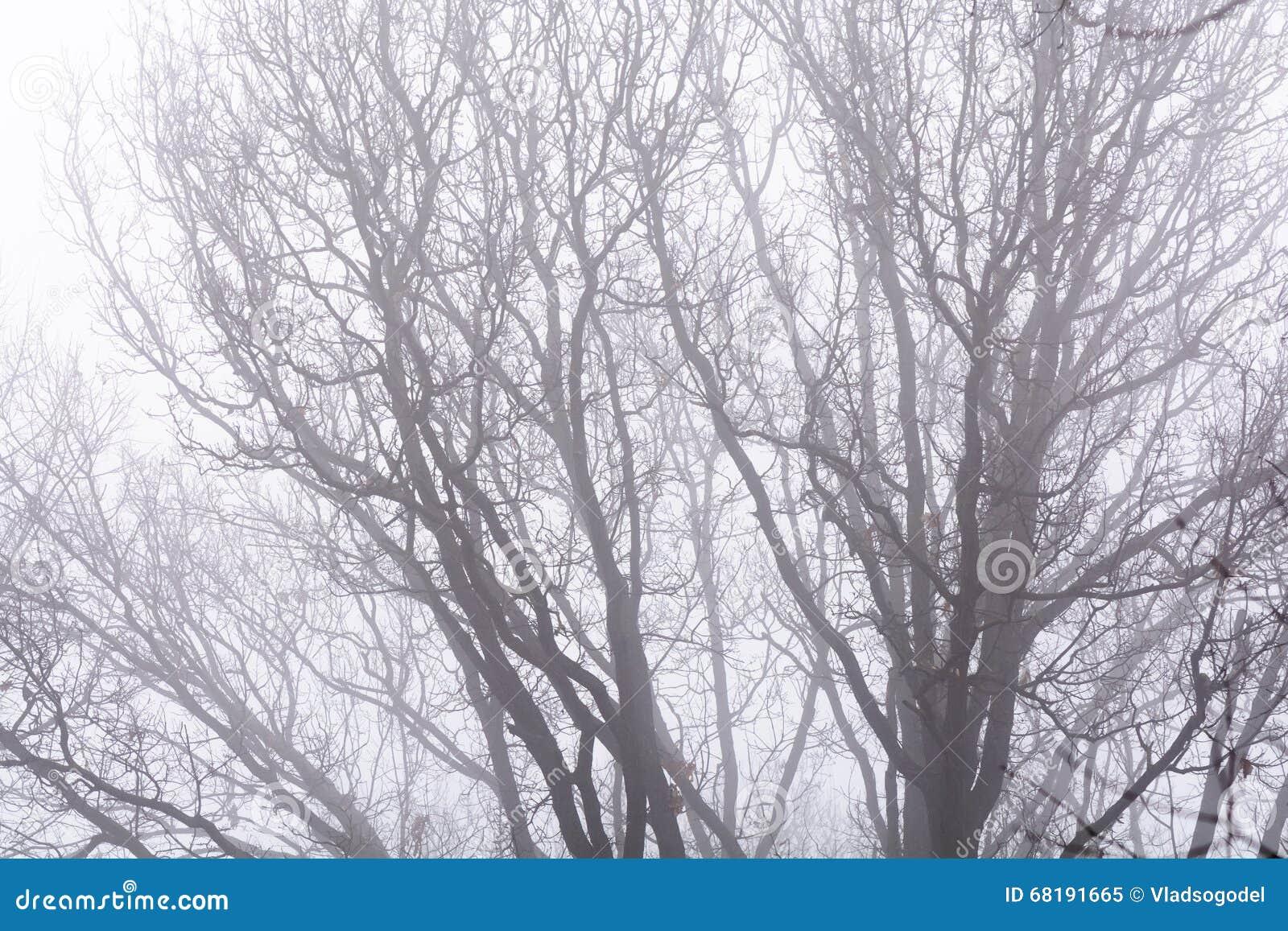 Изолированные ветви над белым небом Черные чуть-чуть ветви дерева на wh