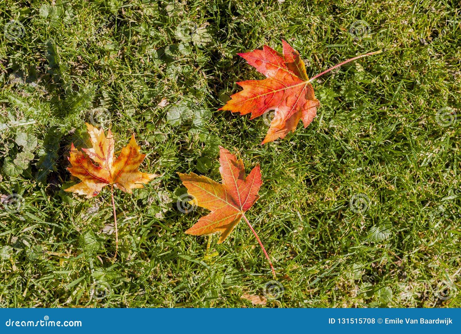 Изумляя изображение листьев осени красных, желтых и коричневых цветов на траве