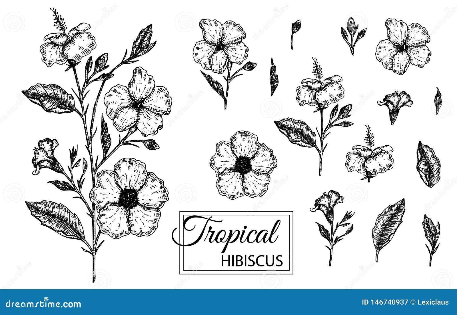 Иллюстрация вектора тропического цветка изолированная на белой предпосылке