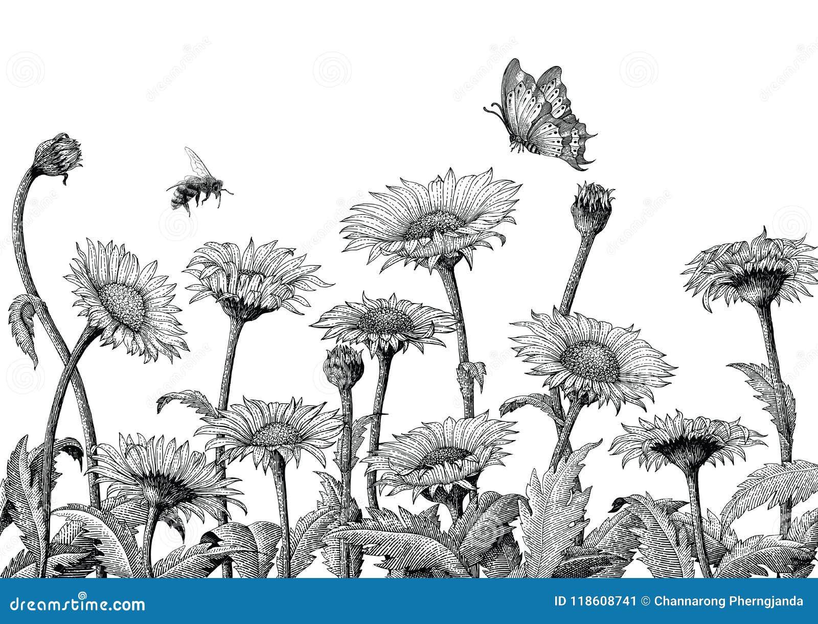 Иллюстрация гравировки чертежа руки поля маргаритки изолированная на whit