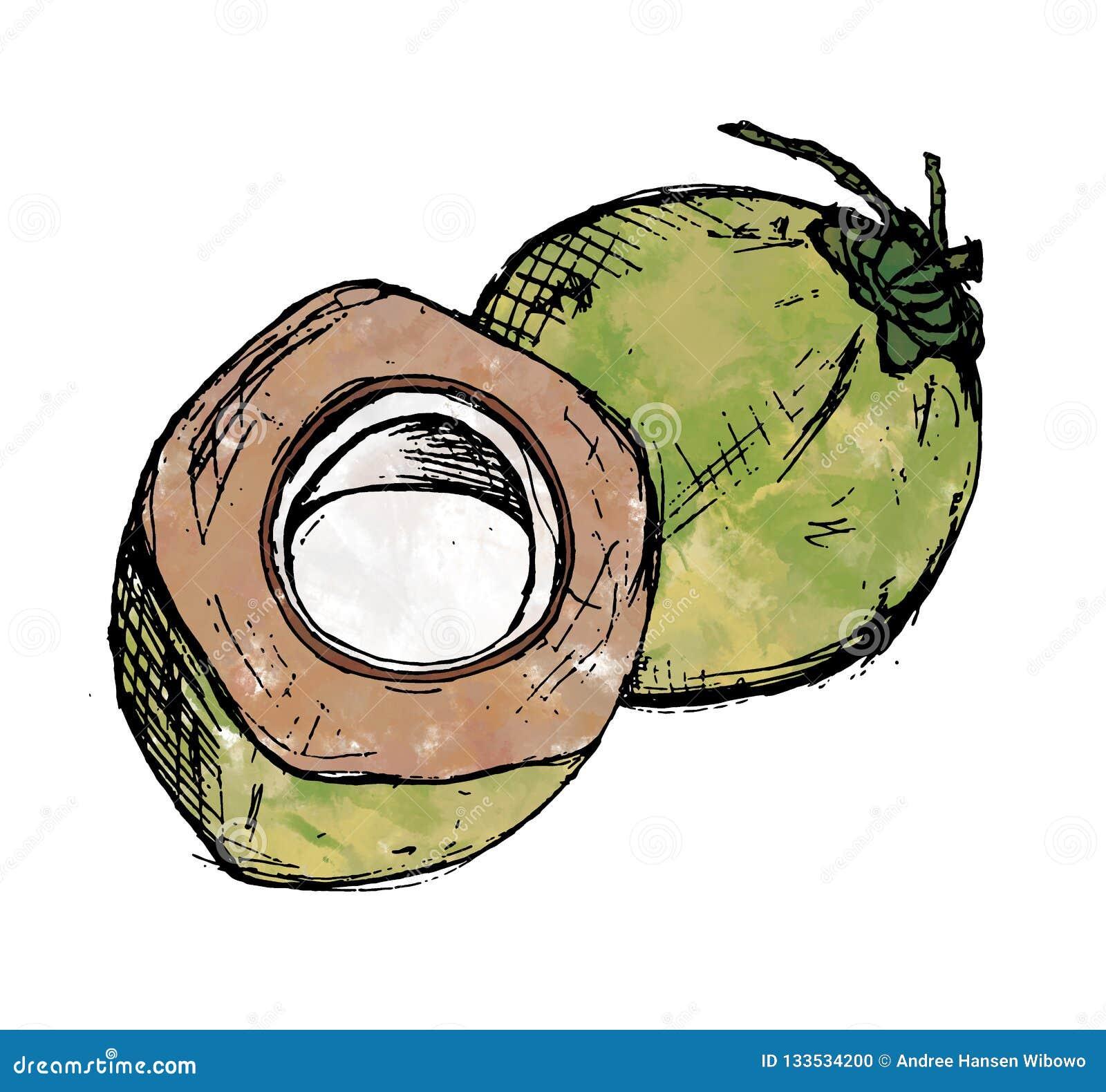 Иллюстрация Watercolour 2 зеленая кокосов